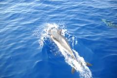 mare-delfini